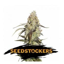 Runtz (3sem) - Seedstockers