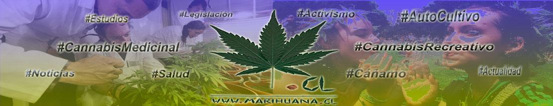 Marihuana.cl ... más que una leyenda.